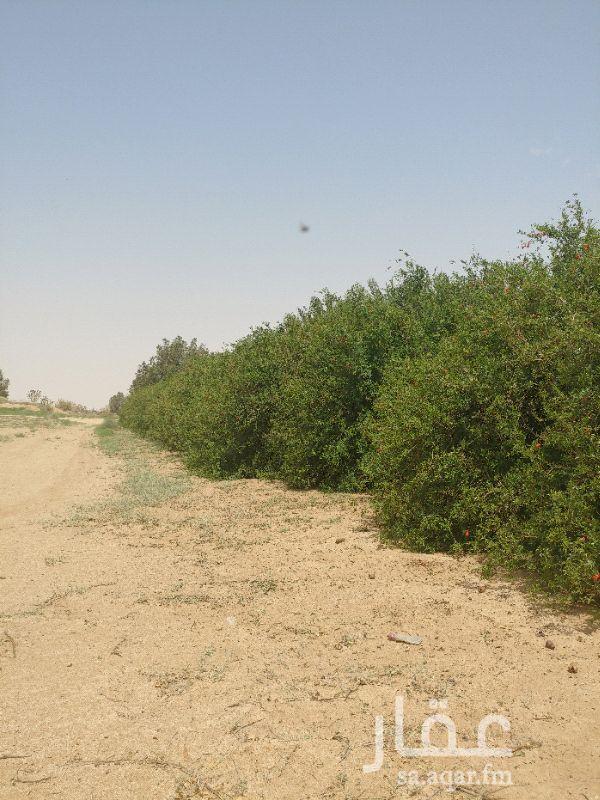 مزرعة للبيع فى المملكة العربية السعودية صورة 13
