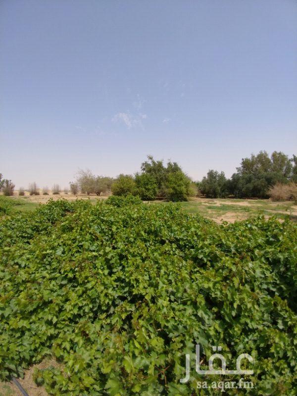 مزرعة للبيع فى المملكة العربية السعودية صورة 16
