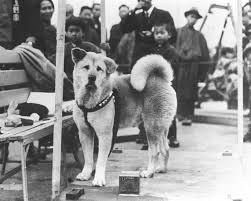 Hachikō, Perro japonés