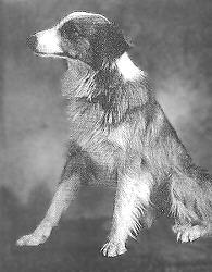 Bobbie 'El perro maravilla'