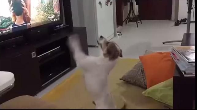 """Perrito se desespera cuando le pausan """"Despacito"""""""