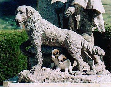 Rinden tributo a los perritos abandonados en Guadalajara