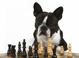 Estudio demuestra que los perros recuerdan lo que hace su dueño