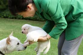 Los perros abandonados por la presidenta surcoreana destituida