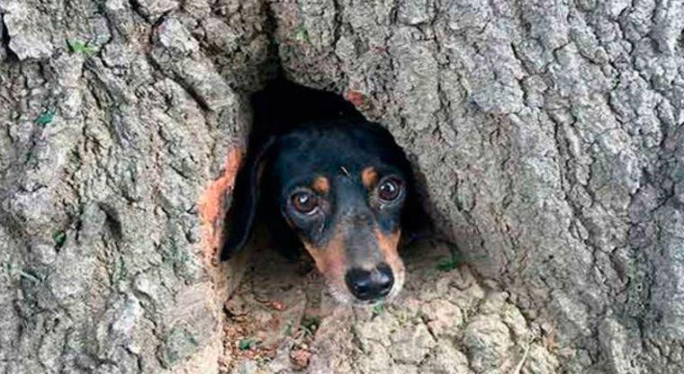 Bomberos rescatan a un perrito de un árbol