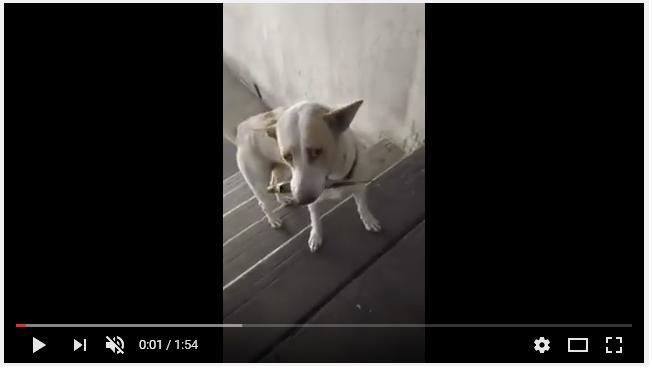(BUEN VIDEO) Perrito le regala flores a la mujer que le da de comer.