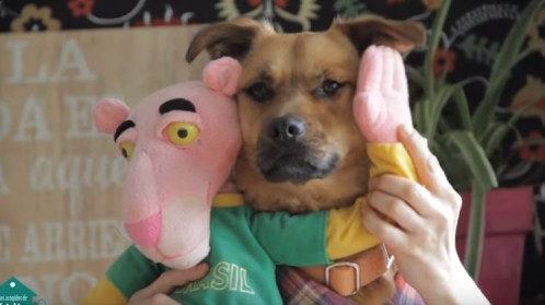 «Tu perrito», la versión de «Despacito» que se ha convertido en un himno para la adopción de perritos