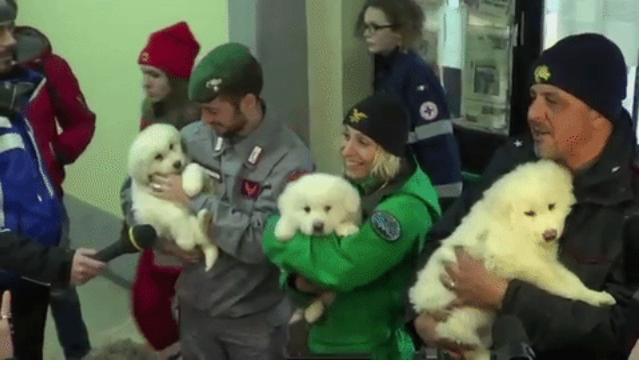 Increíble, Hallan a 3 perritos en hotel sepultado por avalancha en Italia.