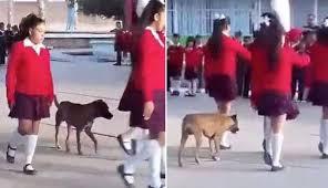 Perrito marcha con la escolta escolar, se vuelve viral (VIDEO)