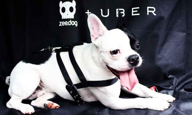 Pide un Uber y podrás encontrar ¡un perrito!