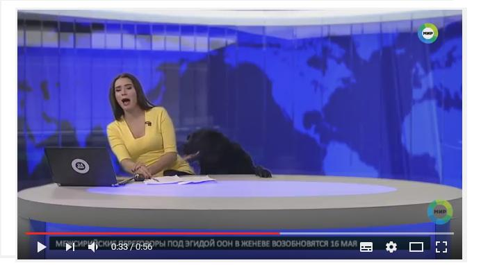 Perro interrumpe noticiario ruso... (VIDEO)