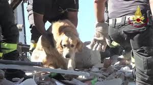 Rescatan a perrito entre los escombros de edificio tras sismo