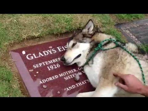 Con la mascota hasta la tumba...