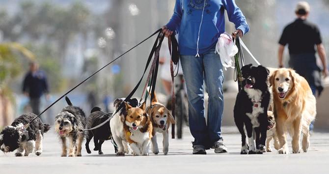 En México, Paseadores de perritos ganan como un profesionista y trabajan menos...