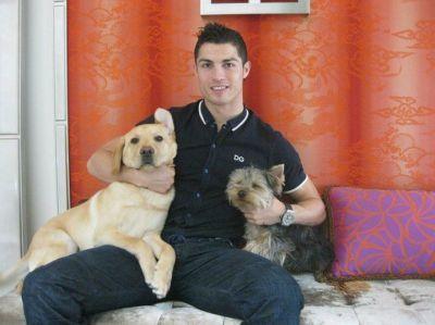 80 perritos son rescatados por futbolista Cristiano Ronaldo