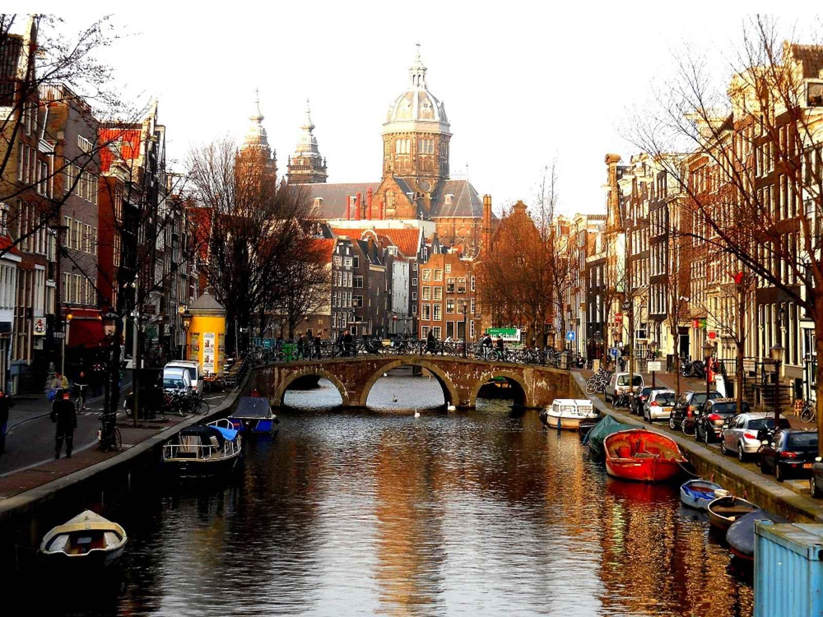 Holanda se convierte en el primer país sin perros callejeros