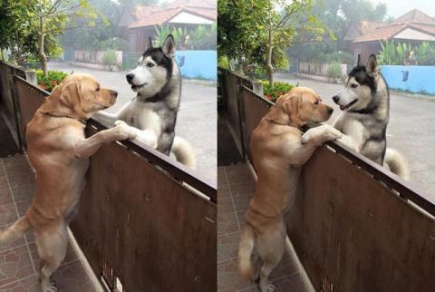 Perro se 'escapa' de su casa para abrazar a su mejor amigo