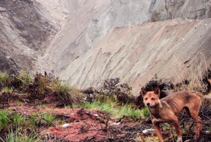 Logran fotografiar después de medio siglo al perrito más raro del mundo