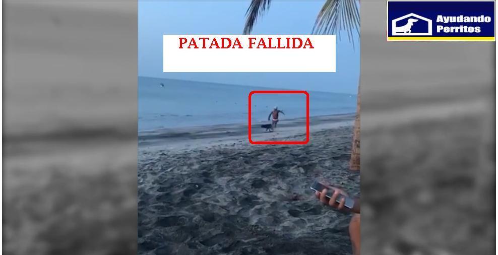 Intenta patear a un perro y el karma lo castiga de inmediato (VIDEO)