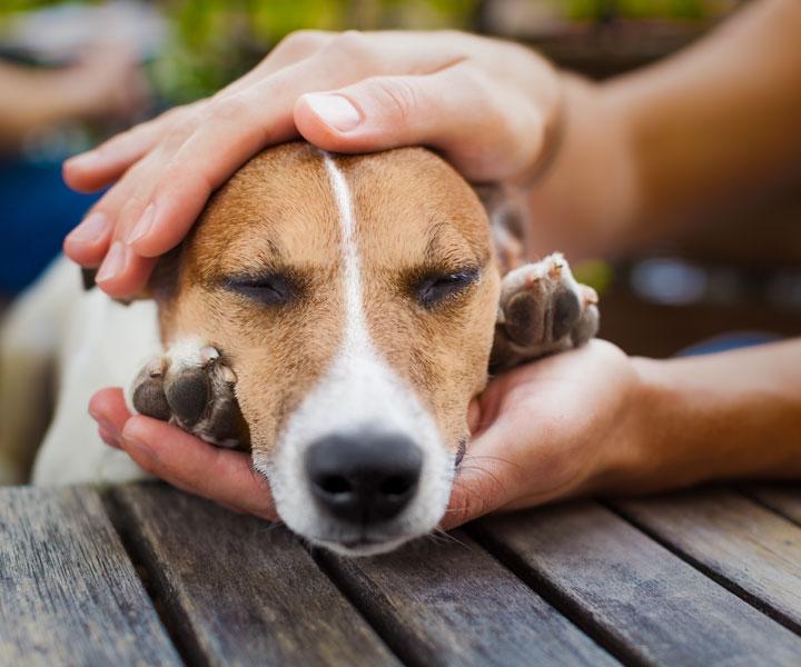 ¿Por qué y dónde adoptar una mascota en CDMX?