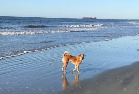 Conoce esta isla que está llena de perritos ¡Guau!  ¡Guau!