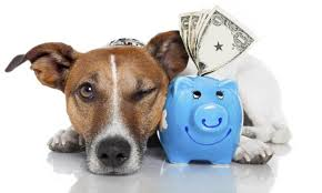 Hasta 54 mil 500 pesos puede costar el tener una mascota