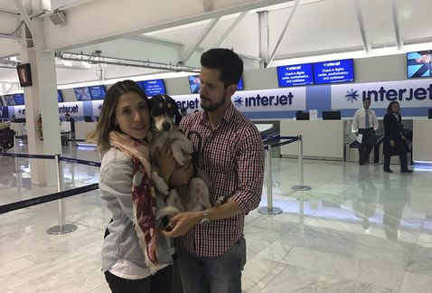 Interjet, Recompensará a dueña de perrita Mika con 10 vuelos.