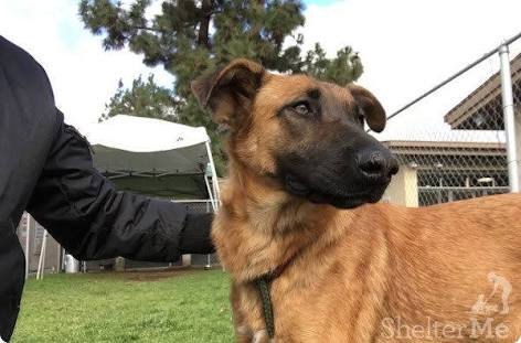 Perrito abandonado en California se reencuentra con su familia pero lo rechazan