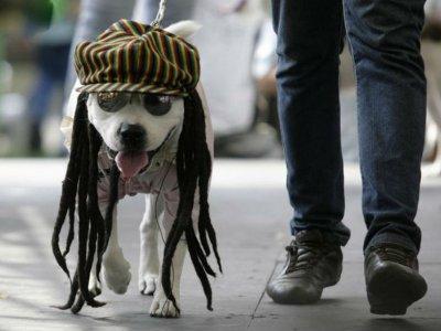 Estudio revela: La música favorita de los perros es el reggae
