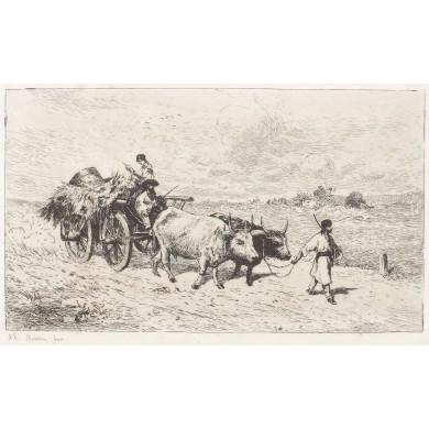 Car cu boi