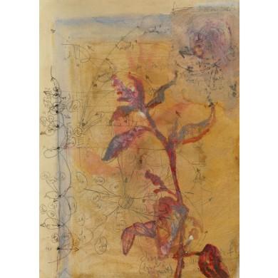 Secţiune florală. Lobodă
