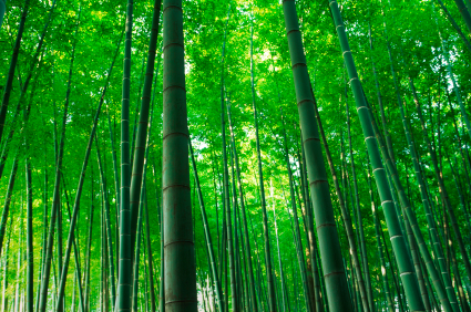 reach for the sky like bamboo