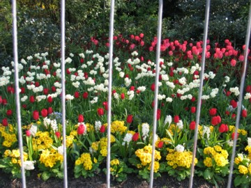 daffodils heaven!