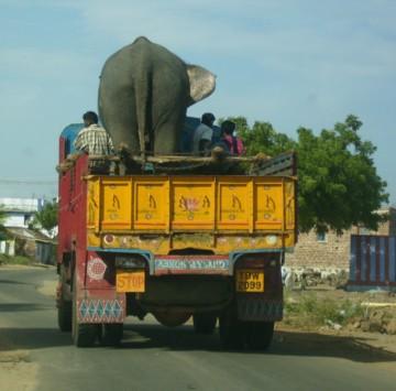 elephant bus!
