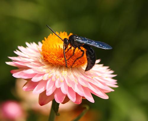 miracle moth