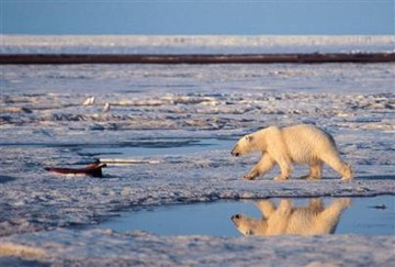 polar bears could be a thing of the past soon unless we all act now