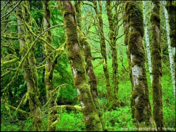 soon the rainforests may just be a dream