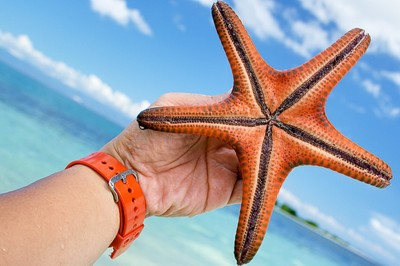 give starfish a helping hand!