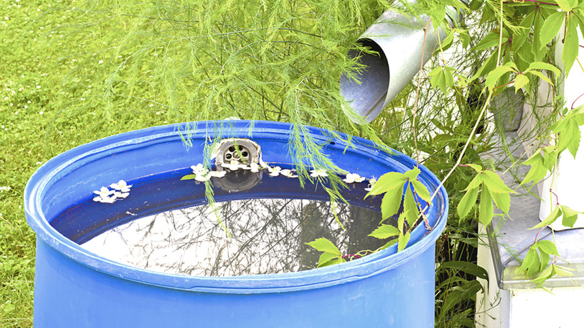GREYWATER SYSTEMS - AN EFFECTIVE WATERING RESOURCE