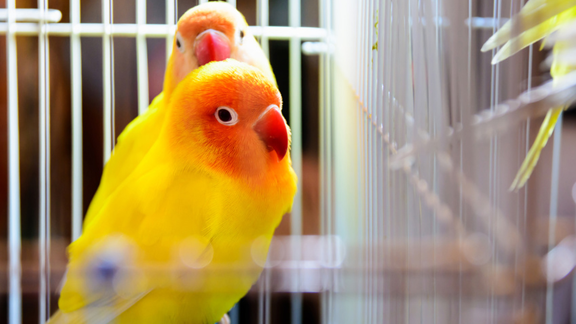 TIPS FOR BIRD-OWNING HOMEOWNERS