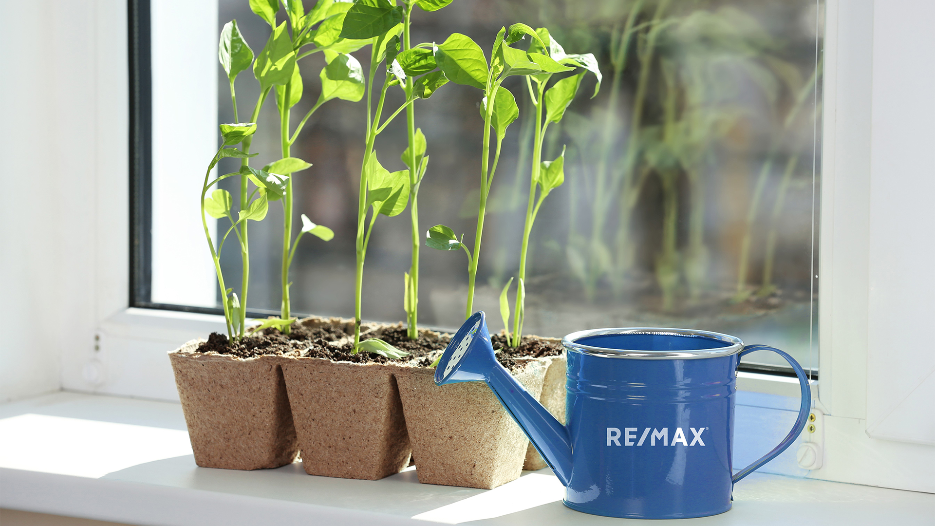 4 TRICKS TO GROWING VEGGIE GARDENS IN AN APARTMENT