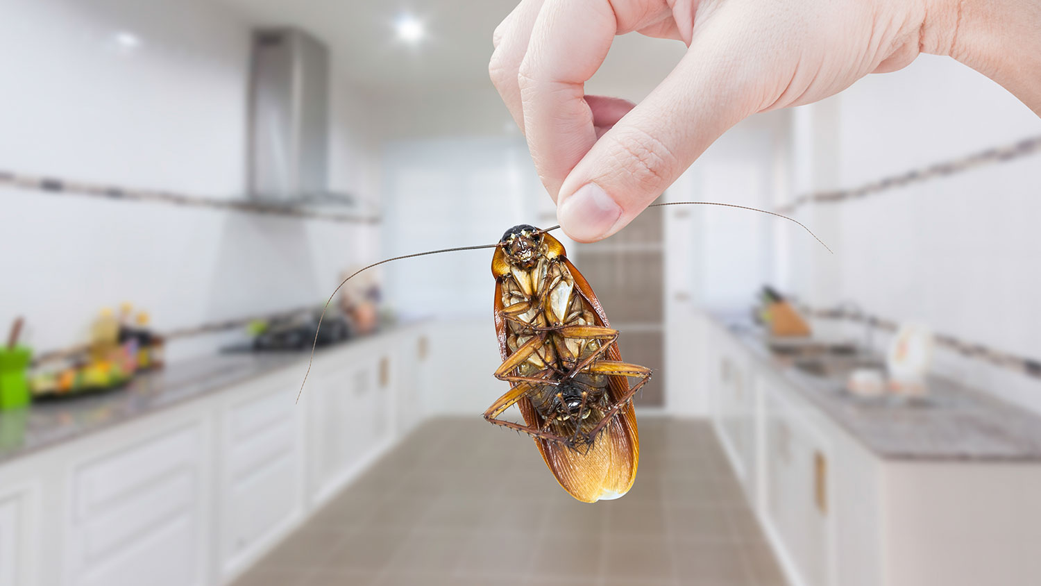 4 ECO-FRIENDLY WAYS TO RID YOUR HOME OF PESTS
