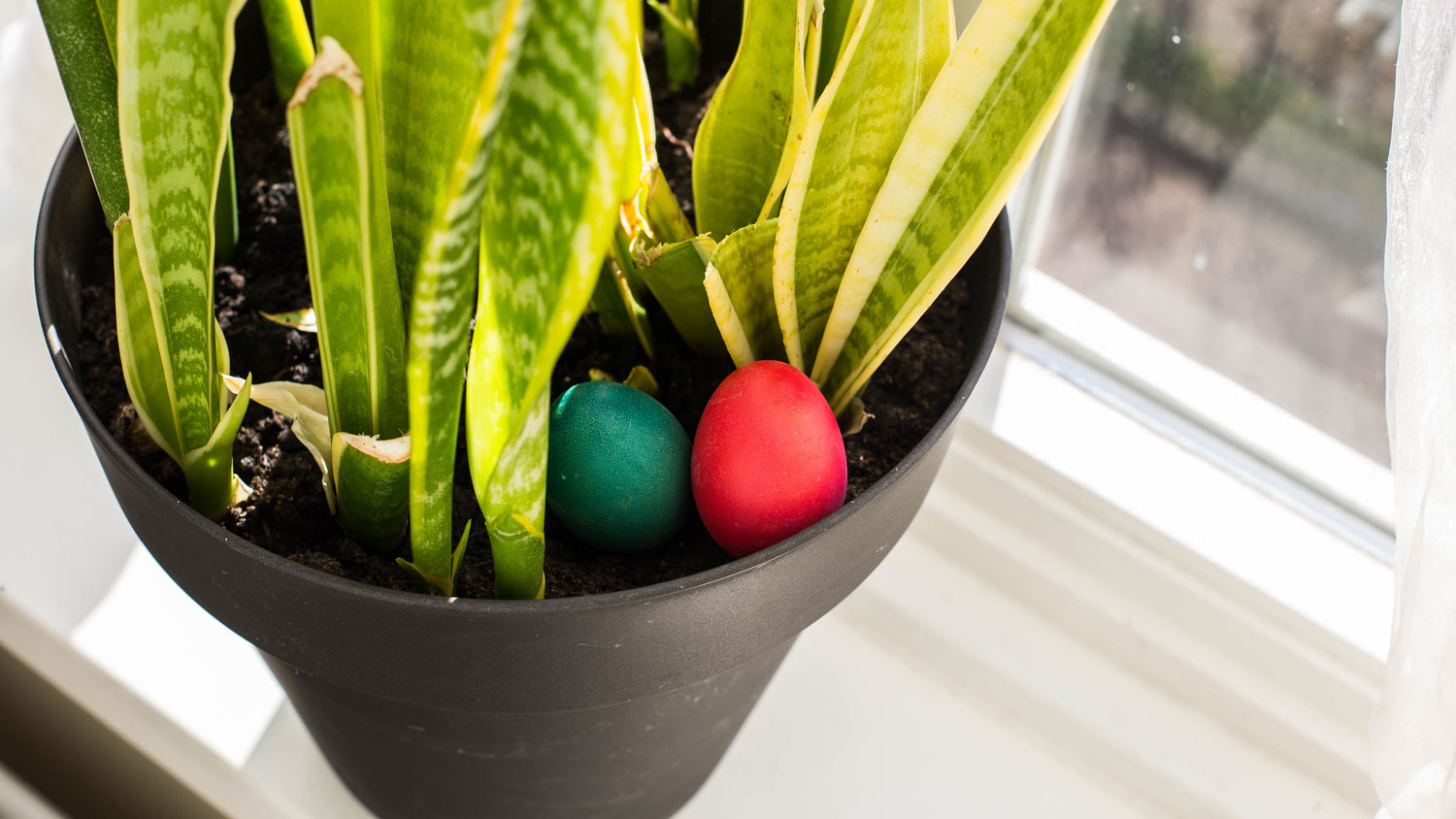 THE BEST SPOTS TO HIDE EASTER EGGS IN YOUR HOME