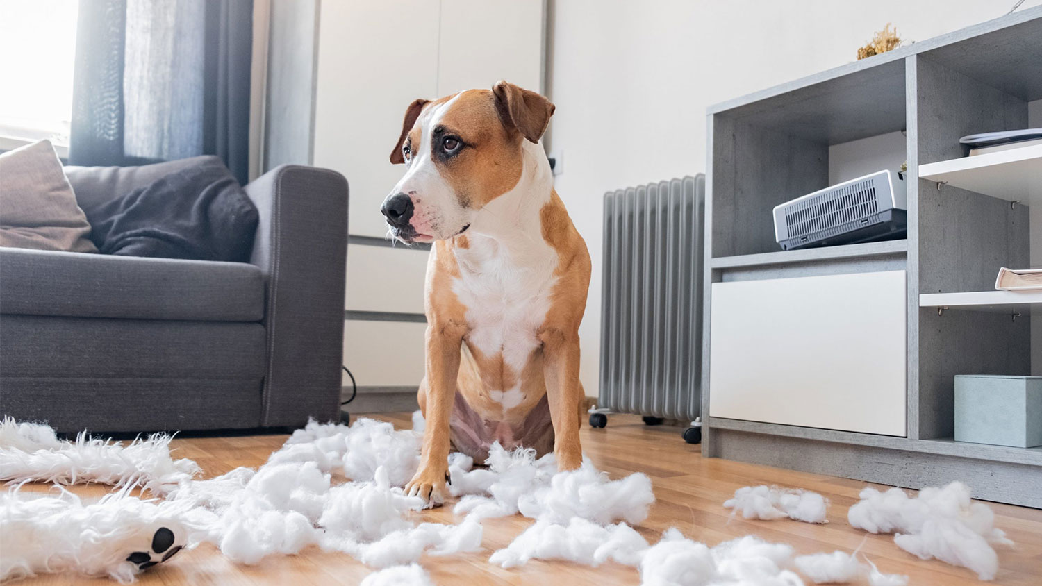 HOW TO PREPARE YOUR PETS BEFORE YOU GO BACK TO WORK