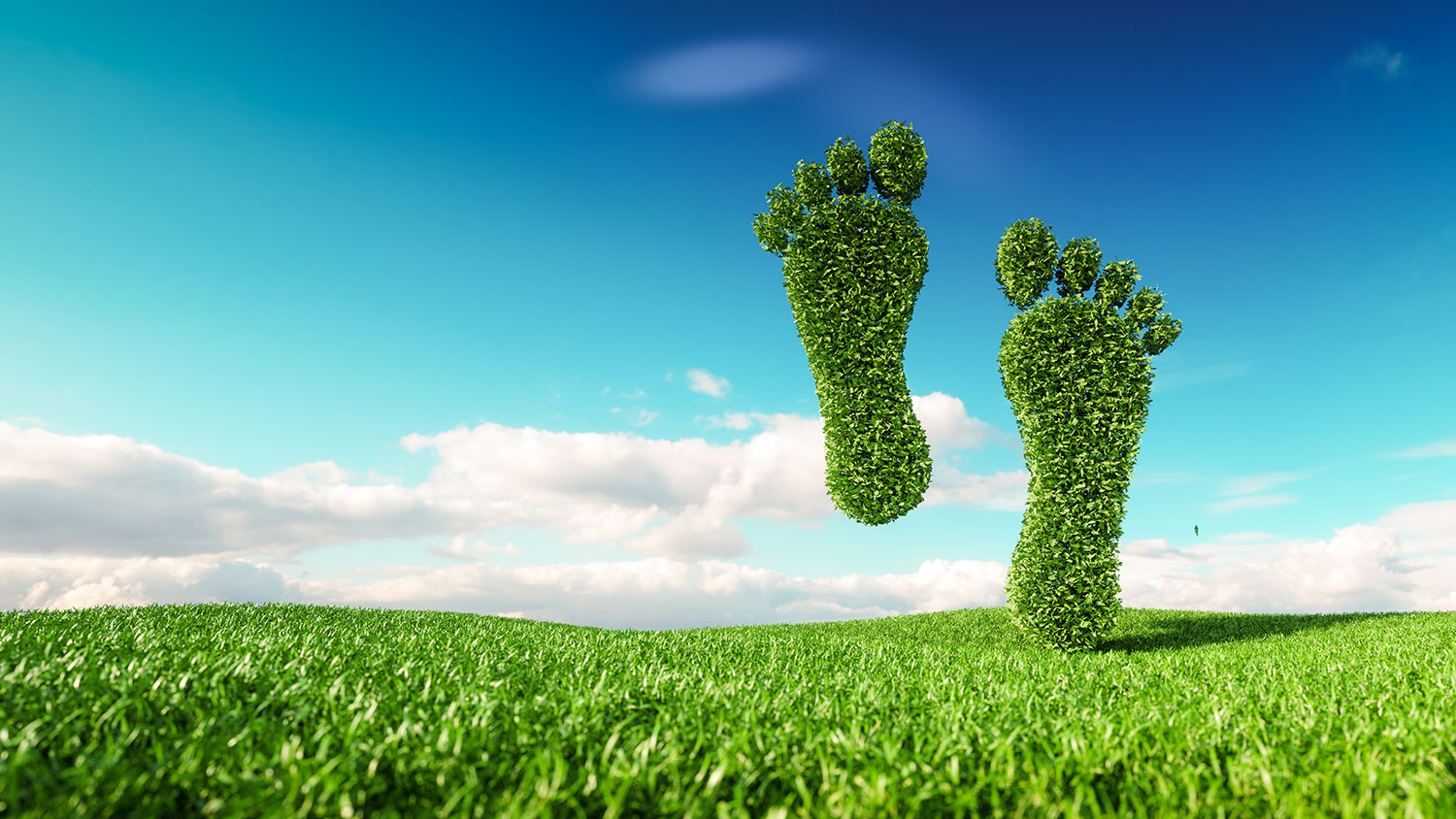 4 EASY WAYS TO REDUCE YOUR CARBON FOOTPRINT