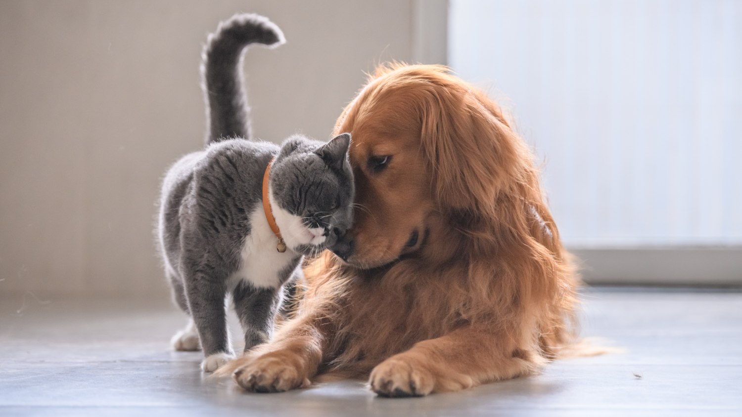 HOUSE RULES FOR KEEPING PETS IN SOUTH AFRICA