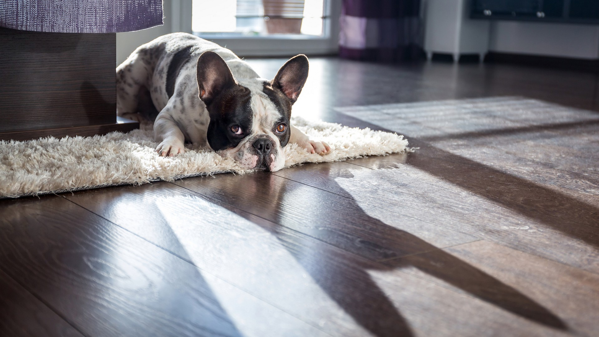 SELLING A HOME WHEN YOU HAVE PETS