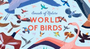 World Of Birds Cover