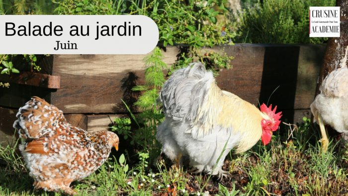 Balade-au-jardin de CRUsine Academie