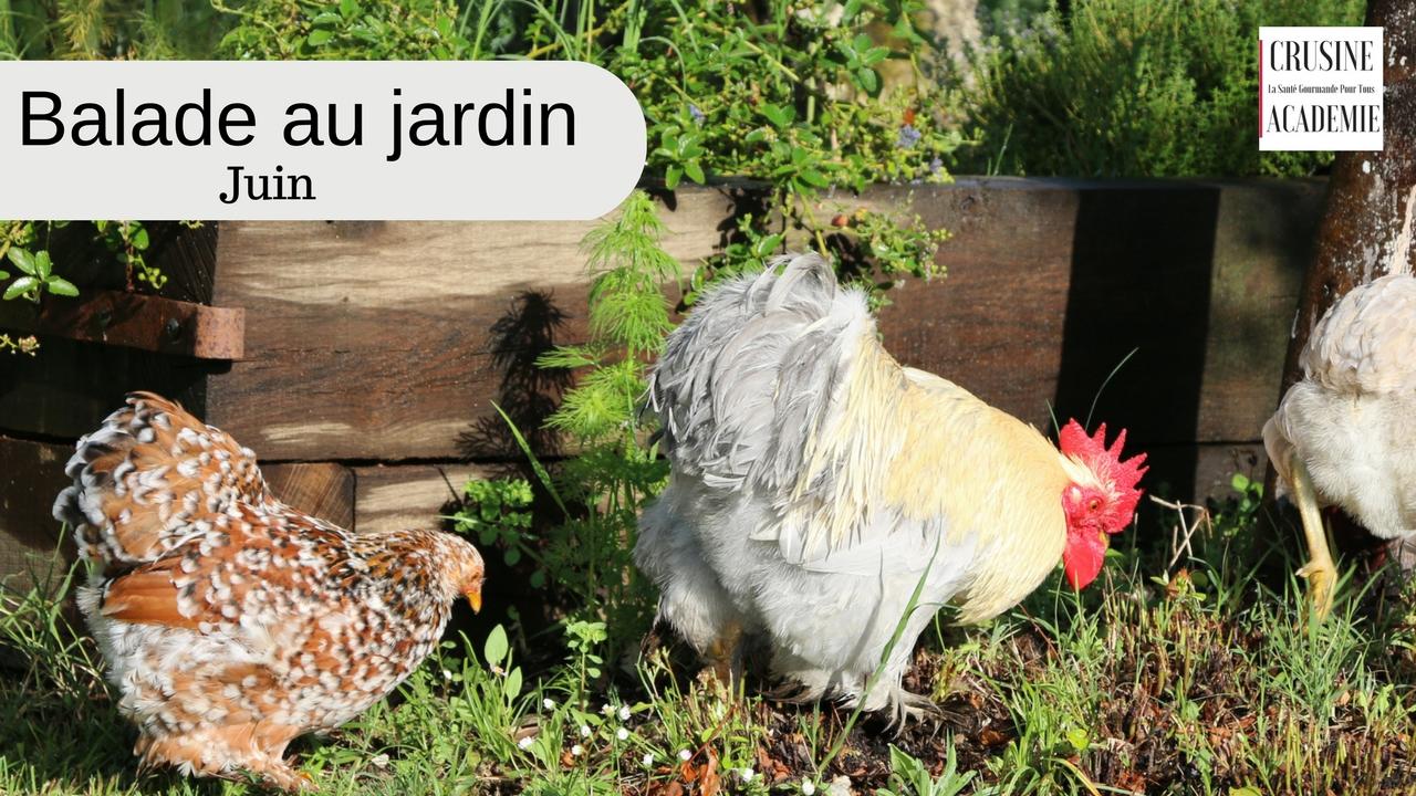 Une balade dans le jardin potager de crusine academie au for Juin au jardin